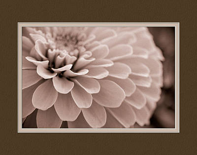 Zinnia Close-up Poster by Charles Feagans