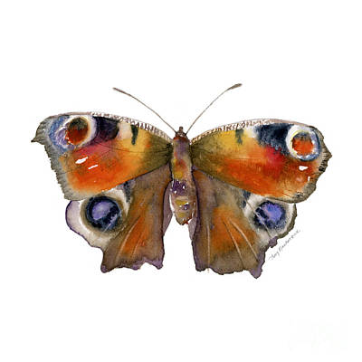 10 Peacock Butterfly Poster by Amy Kirkpatrick