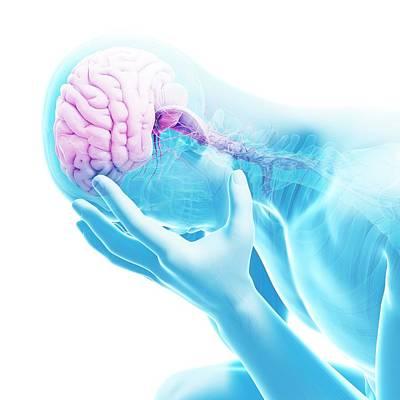Human Brain Poster by Sebastian Kaulitzki