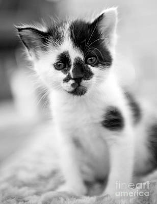 Spotted Black And White Kitten Poster by Iris Richardson