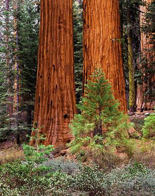 Usa, California, Yosemite National Poster by Adam Jones