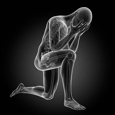 Human Skeletal System Poster by Sebastian Kaulitzki