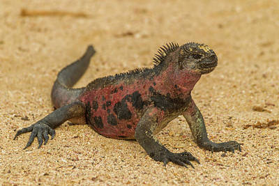 Ecuador, Galapagos National Park Poster by Jaynes Gallery