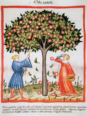 Tacuinum Sanitatis, Medieval Health Poster by Prisma Archivo