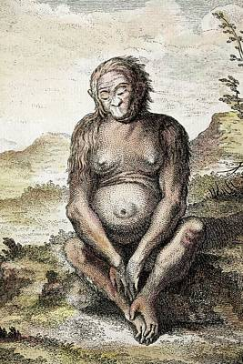 1748 Orang Outang Orangutan Of Tulp 1641 Poster by Paul D Stewart