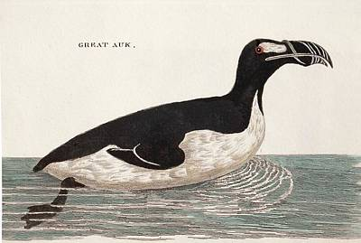 1776 Pennant Swimming Extinct Great Auk Poster by Paul D Stewart