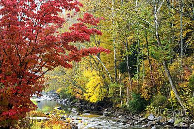 Autumn Elk River Poster by Thomas R Fletcher