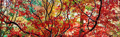 Autumn Leaves, Westonbirt Arboretum Poster by Panoramic Images