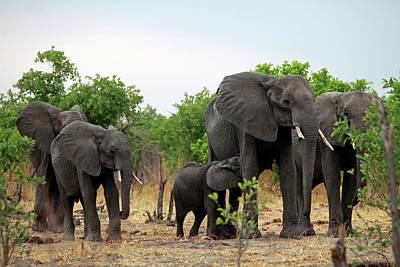 Botswana, Savute Poster by Kymri Wilt