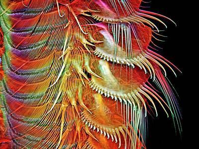 Brine Shrimp Legs Poster by Igor Siwanowicz