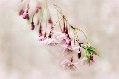 Budding Blossom Poster by Jessica Jenney