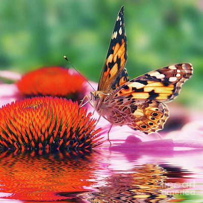 Butterfly Poster by Angela Doelling AD DESIGN Photo and PhotoArt