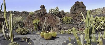 Cactus Garden, Lanzarote Poster by Tony Craddock