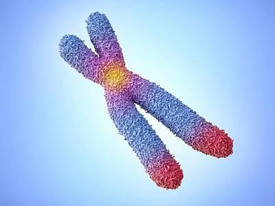 Chromosome Poster by Maurizio De Angelis