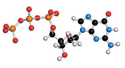 Deoxyguanosine Triphosphate Molecule Poster by Molekuul