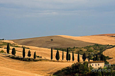 Farmhouse, Tuscany, Italy Poster by Tim Holt