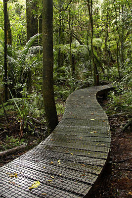 Forest Boardwalk Poster by Les Cunliffe