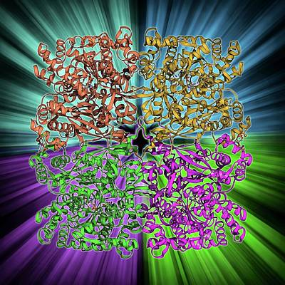 Glycogen Phosphorylase Molecule Poster by Laguna Design