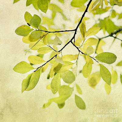 Green Foliage Series Poster by Priska Wettstein