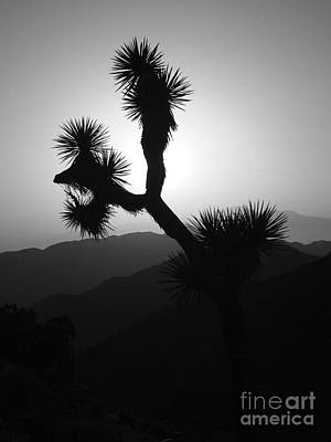 New Photographic Art Print For Sale Joshua Tree At Sunset Black And White Poster by Toula Mavridou-Messer