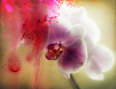 Orchid Poster by Renata Vogl