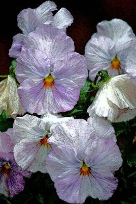 Pansy 4 Poster by Pamela Cooper
