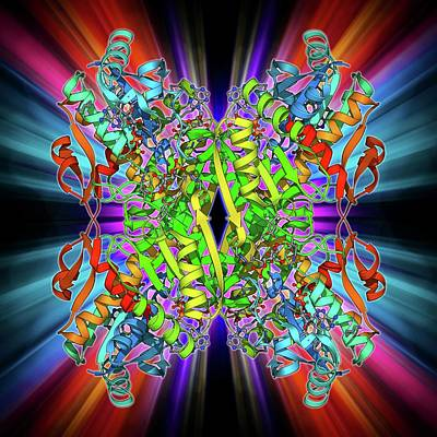 Phosphofructokinase Bacterial Enzyme Poster by Laguna Design