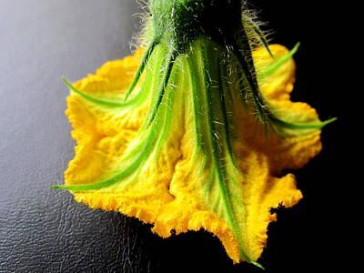 Pumpkin Flower Poster by Joyce Woodhouse