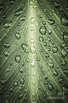 Raindrops On Green Leaf Poster by Elena Elisseeva