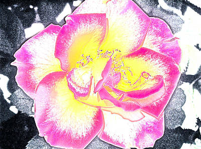 Rose 3 Poster by Pamela Cooper