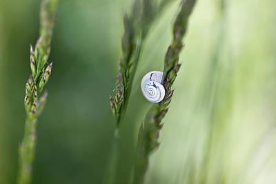 Snail On Grass Poster by Nailia Schwarz