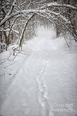 Snowy Winter Path In Forest Poster by Elena Elisseeva