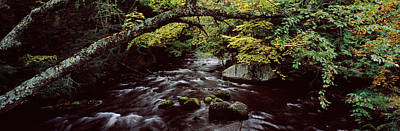 Stream Flowing Through A Forest Poster by Panoramic Images
