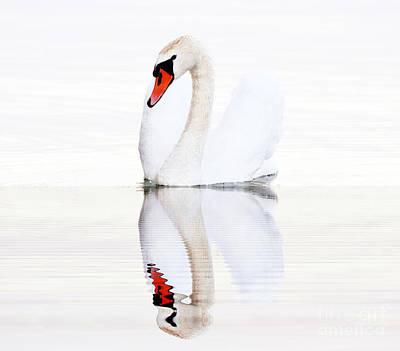 Swans On Balaton Lake  Poster by Odon Czintos