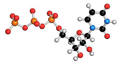 Uridine Triphosphate Nucleotide Molecule Poster by Molekuul