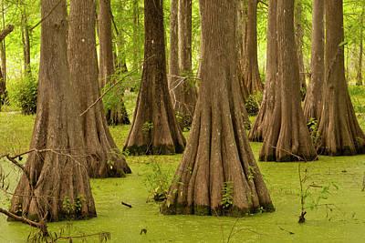 Usa, Louisiana, Lake Martin Poster by Jaynes Gallery