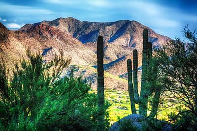 Warm Desert Sunset Poster by Fred Larson