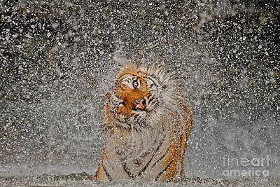 2012 Nat Geo Photo Contest Winner Poster by Ashley Vincent