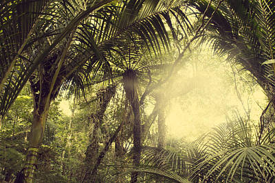 Tropical Forest Poster by Les Cunliffe