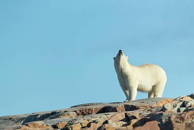 Canada, Nunavut Territory, Repulse Bay Poster by Paul Souders
