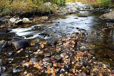 Autumn Along Cranberry River Poster by Thomas R Fletcher