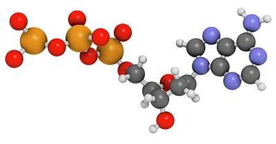 Deoxyadenosine Triphosphate Molecule Poster by Molekuul