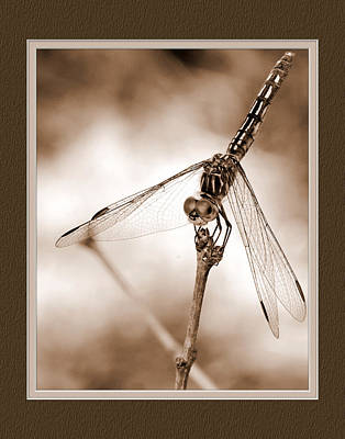 Dragonfly Close-up II Poster by Charles Feagans
