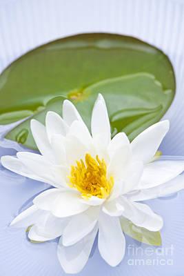 Lotus Flower Poster by Elena Elisseeva