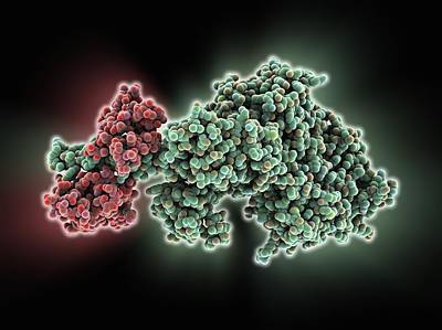 Molecular Motor Protein Poster by Science Photo Library