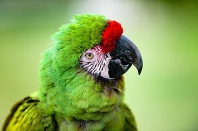 Parrot Poster by Sebastian Musial