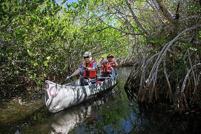 Tourists Canoeing In Mangrove Swamp Poster by Jim West