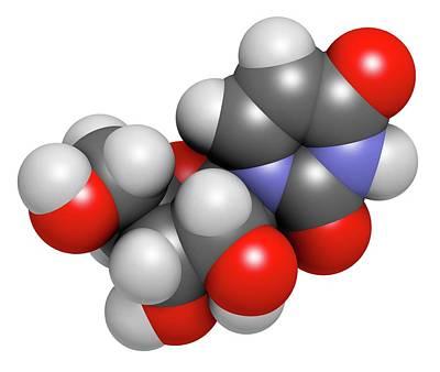 Uridine Nucleoside Molecule Poster by Molekuul