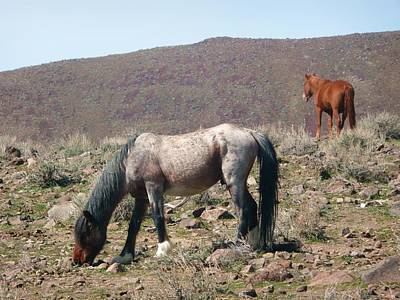 Wild Horses Poster by Amy Ernst