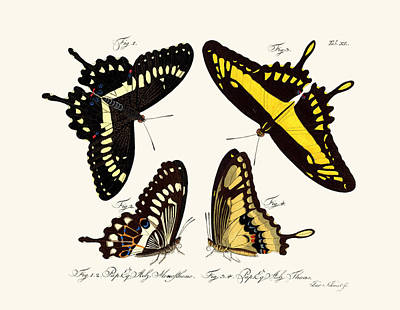 Butterflies Poster by Splendid Art Prints